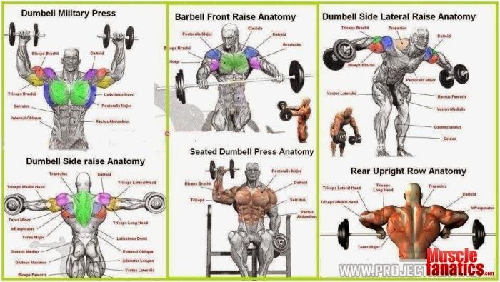 The Six Best Shoulder Exercises - all-bodybuilding.com