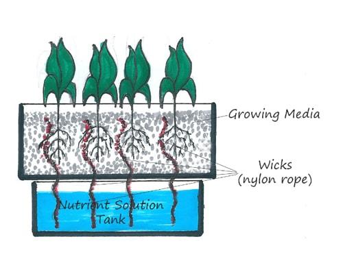 6 Cara Bertanam Hidroponik bagi Pemula Dirumah