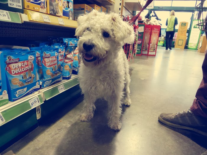 dog in pets at home