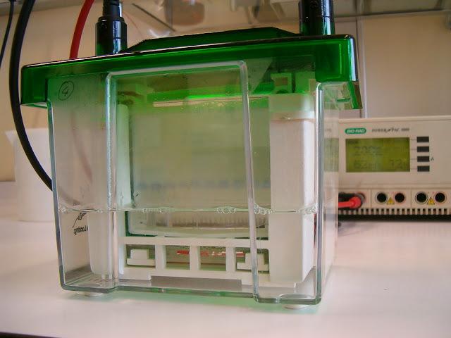 PAGE  ( Polyacrylamide gel electrophoresis )