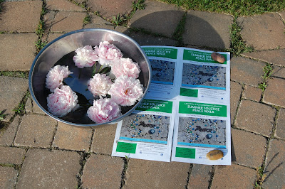 Peonies on the Carleton Place Community Labyrinth