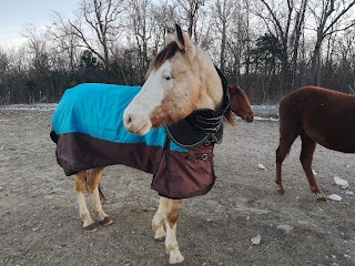 blanketing a PSSM horse, cold affects PSSM horses, stop cold weather spasms in PSSM horses
