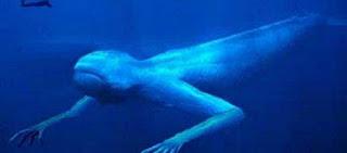 Κινεζική Θάλασσα: Αυτά τα περίεργα πλάσματα κρύβει στο βυθό της (βίντεο)