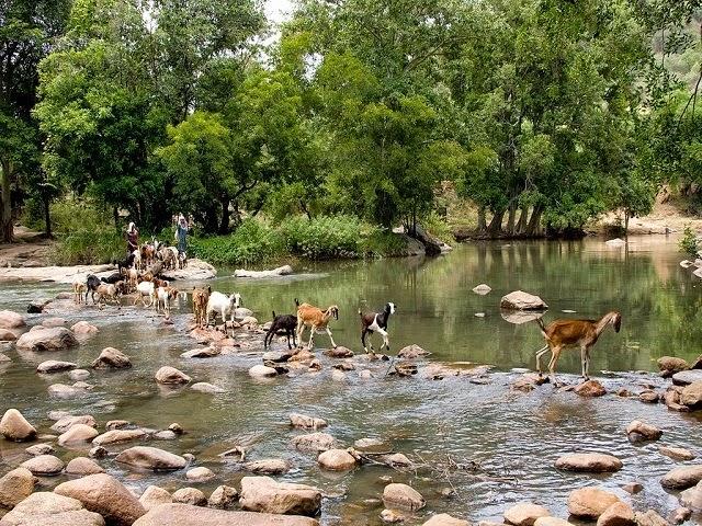 Top Wildlife Sanctuaries in Kerala   Luxury Travel Blog - ILT