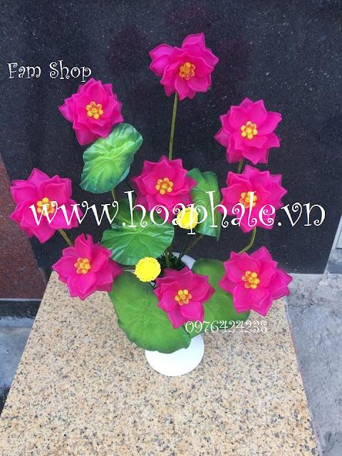 Hoa da pha le tai Doi Can