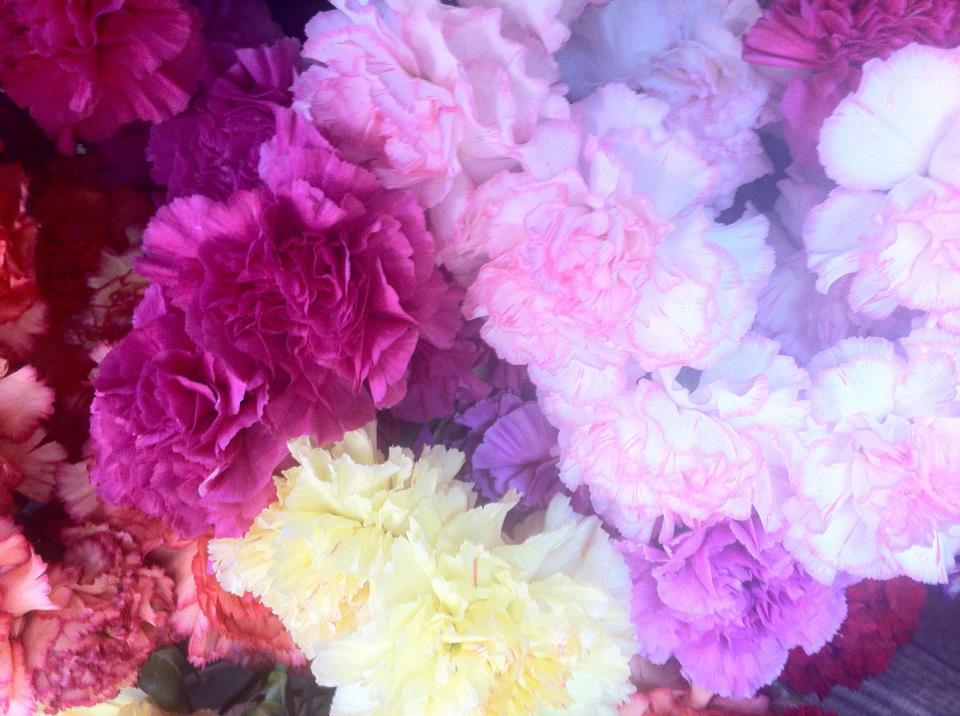 What Color Are Carnations Naturally