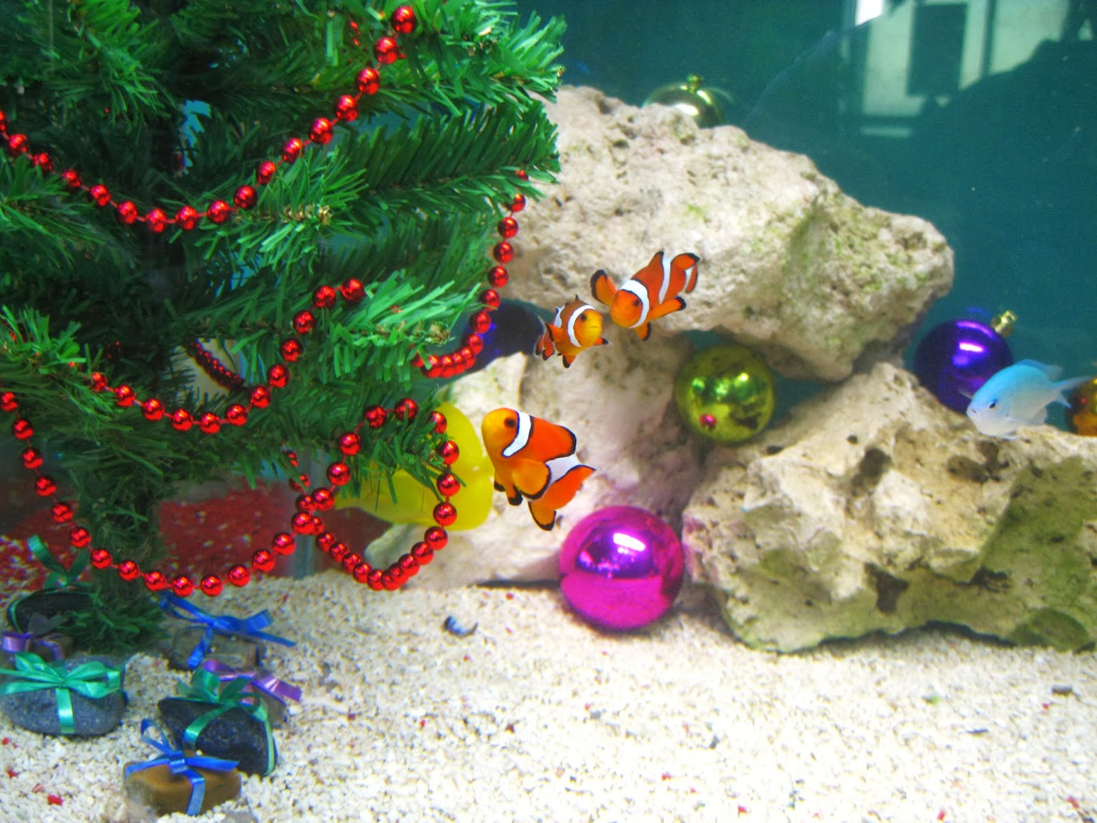 Saltwater fish tank xmas decorations 2017 fish tank maintenance - Fish tank christmas decorations ...