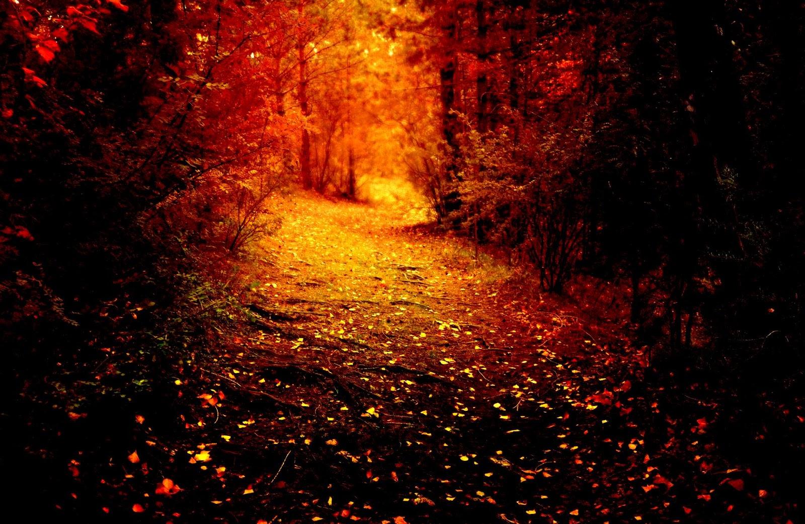 Dark Woods 2 2015