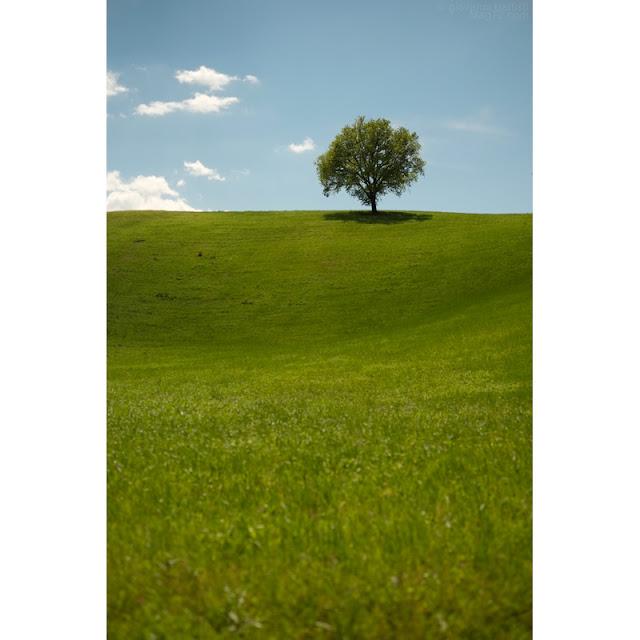 Albero, nubi e prato verde