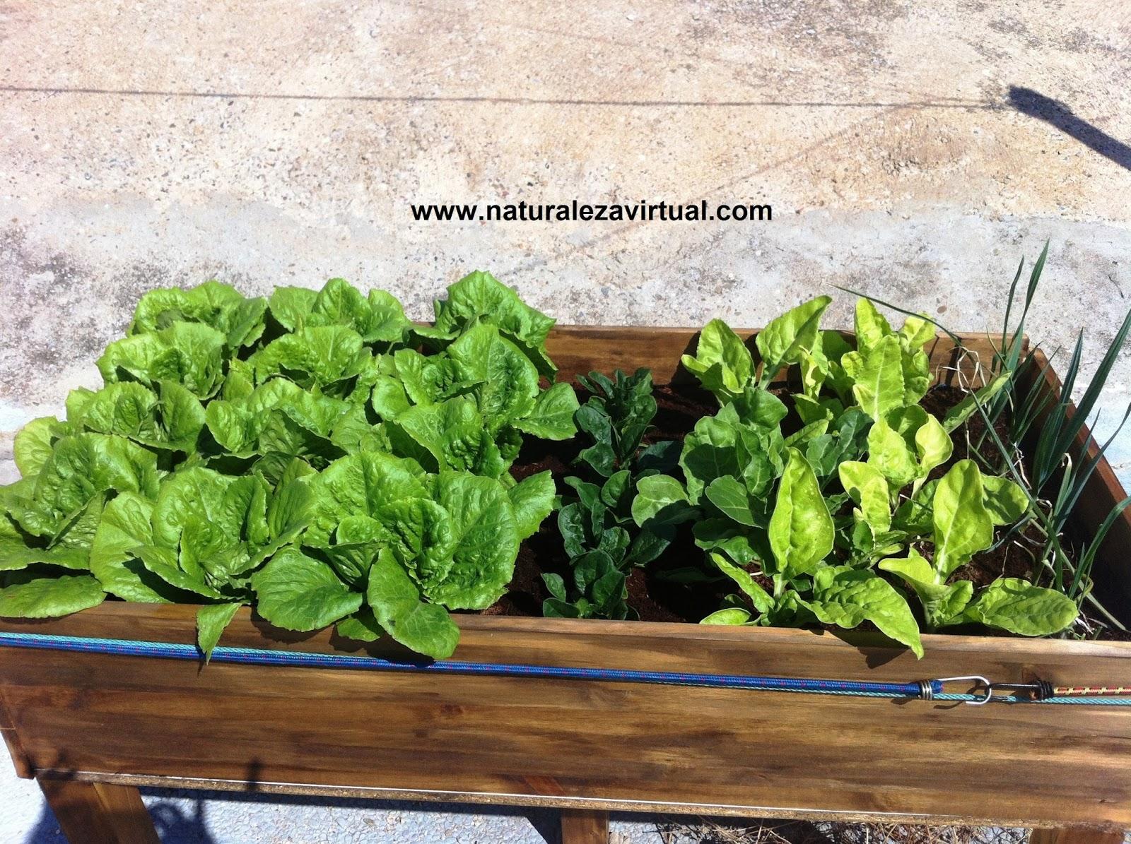 Macetohuerto mesas de cultivo cultivo en macetas for Mesa de cultivo casera