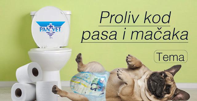 Proliv dijareja kod pasa i mačaka Panvet Subotica
