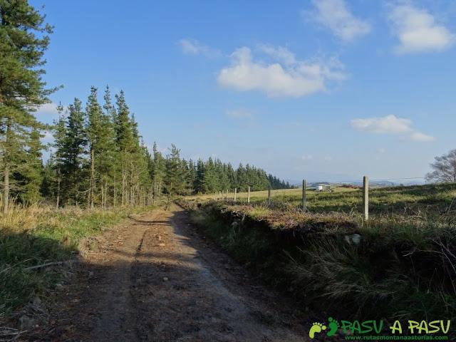 Ruta de las Cercanías del Cielo bajando entre pinos