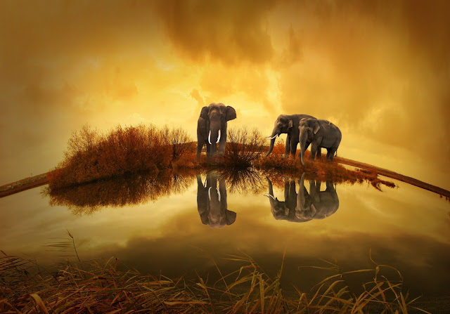 Grey Elephants Under Yellow Sky Reflections Shows  Water Beautiful HD Wallpaper