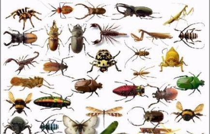 مكافحة الحشرات بجدة والمملكة العربية السعودية