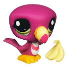 Littlest Pet Shop Singles Toucan (#2527) Pet