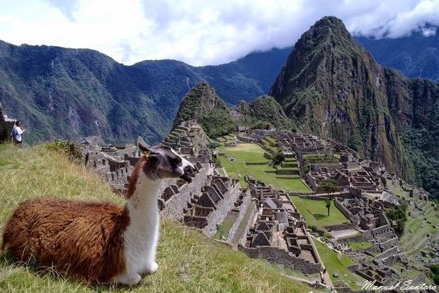 Machu Picchu, lama