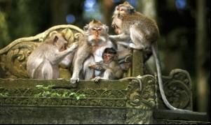 Tempat-tempat Keren Yang Wajib Dikunjungi Saat Di Bali 10 Monkey Forest