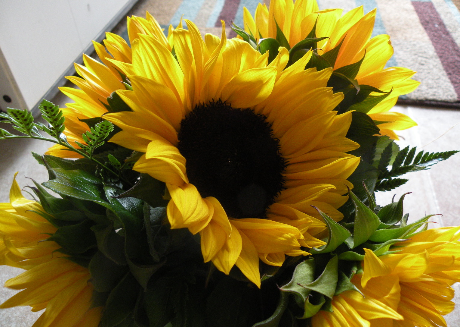 December Birthday Flower Gallery Flower Wallpaper Hd