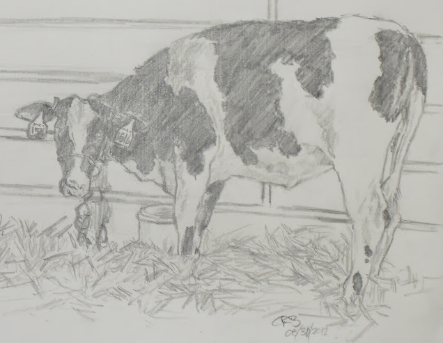 C Bakunas Art: Cow Sketching In The USA
