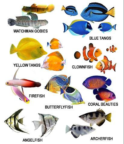 Macam Macam Ikan Hias Air Laut Yang Unik Dan Cantik Ikan Ikan Cantik
