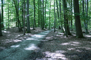 Durch die Keltenschanze Holzhausen 2 führender Weg in Richtung der südwestlichen Ecke