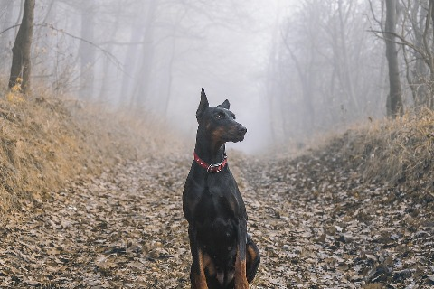 doberman-my-list-mag
