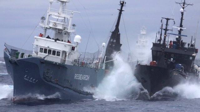 13 MEMBER HUNTING CREW DIES FROM A WHALE ATTACK AS WHALING SHIP BREAKDOWN DUE TO AN ENGINE