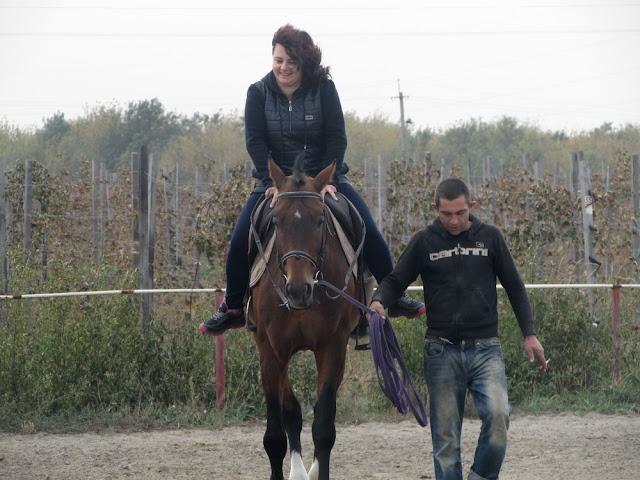 конь на ферме Нибас