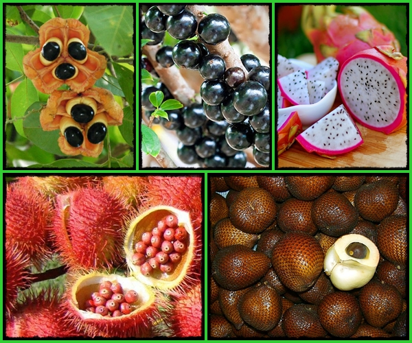 https://bio-orbis.blogspot.com/2015/02/as-15-frutas-e-vegetais-mais-estranhos.html