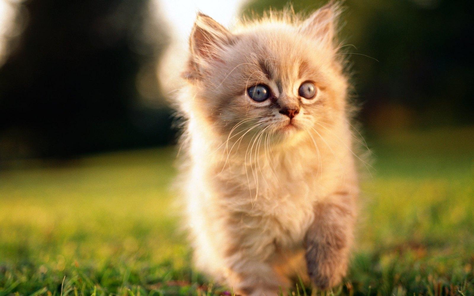 Ajude o seu gato vivem mais; Mantenha Cats interno