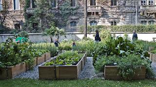 Le piante assumono una funzione di filtro depurativo per l'aria