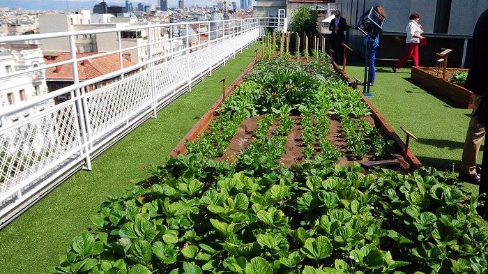 Que es un huerto urbano y cuales son sus beneficios - Que plantar en el huerto ...