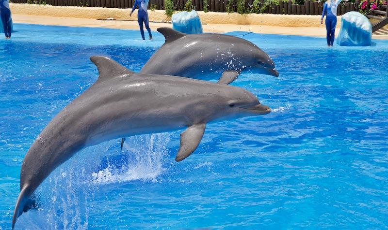 delfiny inteligencja, Podróże, Kobiecym okiem, delfinarium Europa, delfiny w delfinarium, Delfinoterapia jak wygląda, rzeź delfinów, polowanie na delfiny, gdzie zobaczyć delfiny,  delfiny ciekawostki,
