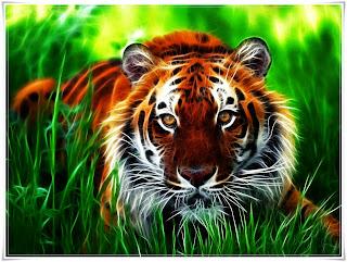 Hasil gambar untuk gambar harimau