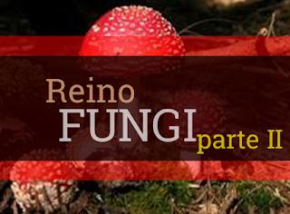 reino fungi resumo reprodução características
