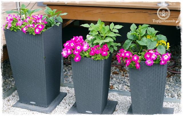 Gartenblog Topfgartenwelt Buchvorstellung Buchrezension: Der mobile Garten - Konzepte für große Pflanzgefäße - Töpfe als Sichtschutz bei der Terrasse