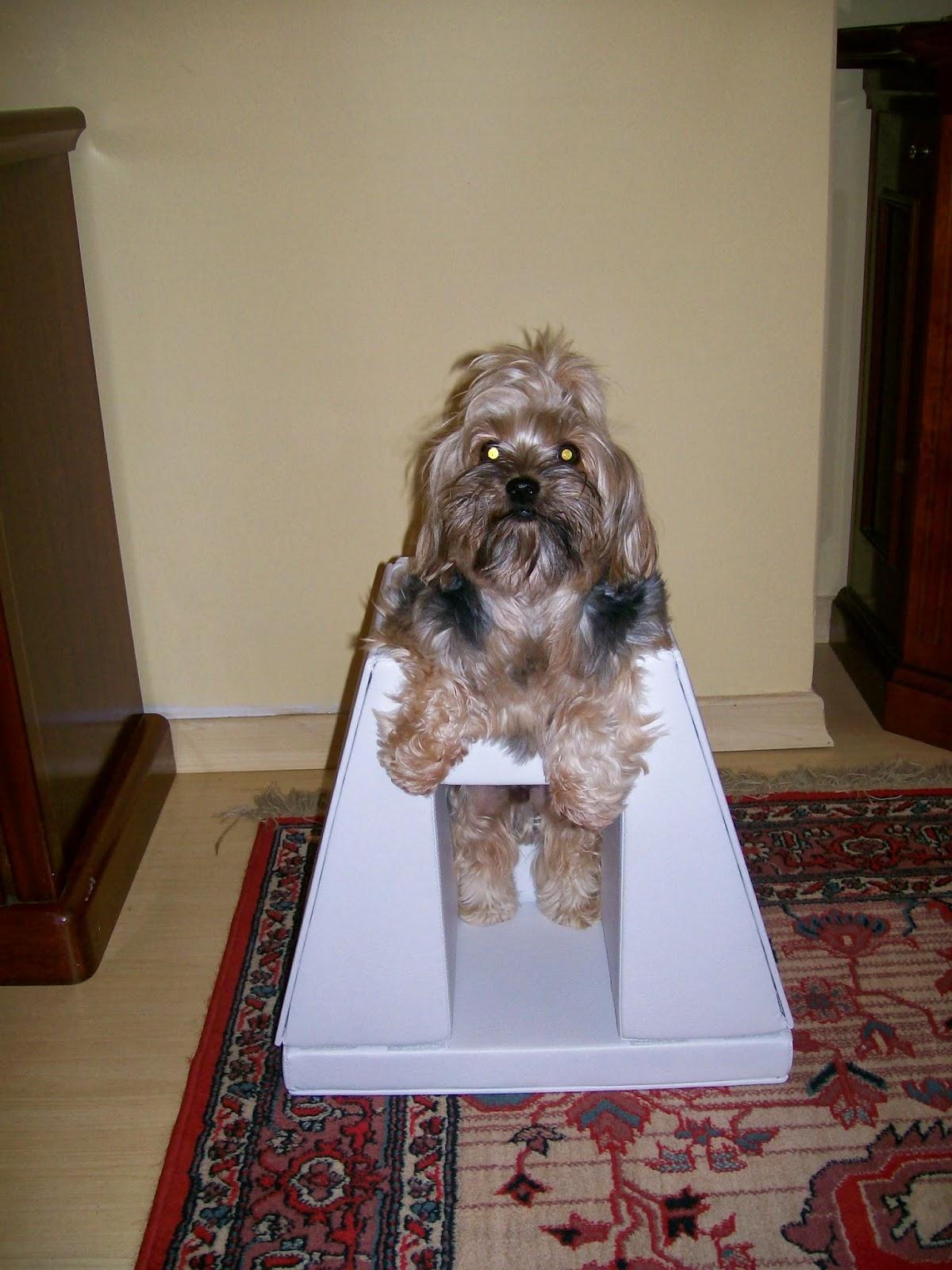 megaesofago cadeira pós alimentação cães pequeno porte
