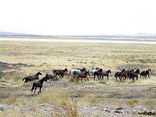 Cavalos Selvagens em Utah, nos Estados Unidos.