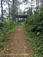 trekking hutan pinus sentul bogor
