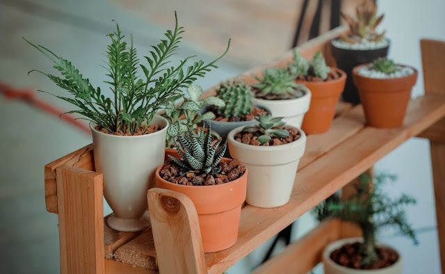 Container Gardening Fundamental