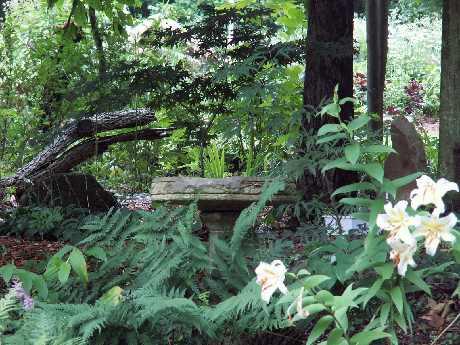 Woodland Shade Gardens For Kaye Blomeke