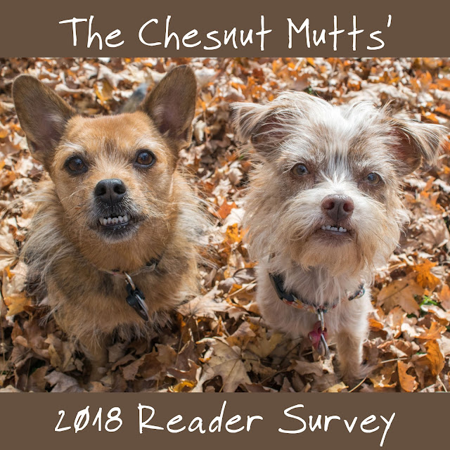 Jada and Bailey from The Chesnut Mutts