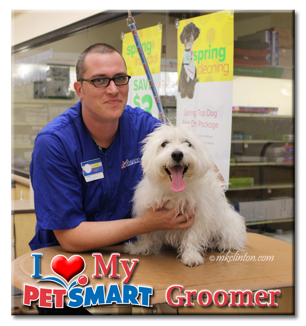 Male PetSmart groomer with White West Highland Terrier
