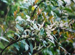 gandapura-www.healthnote25.com