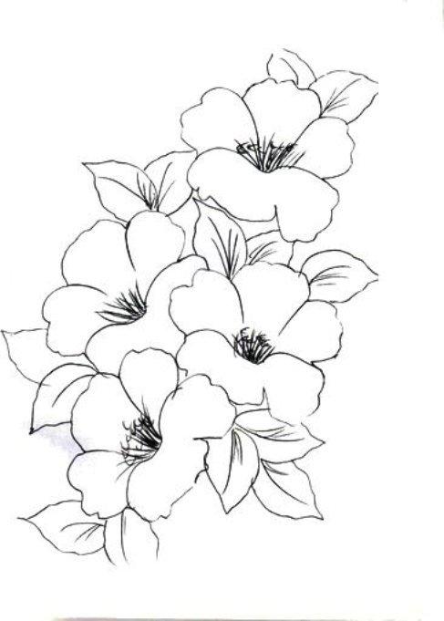 Karakalem çiçek Desenleri çalışmaları Karakalem çizimleri