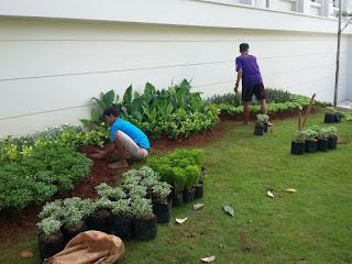 Tukang Taman, Jasa Pembuatan Taman, Jasa Tukang Taman, Jasa Renovasi Taman