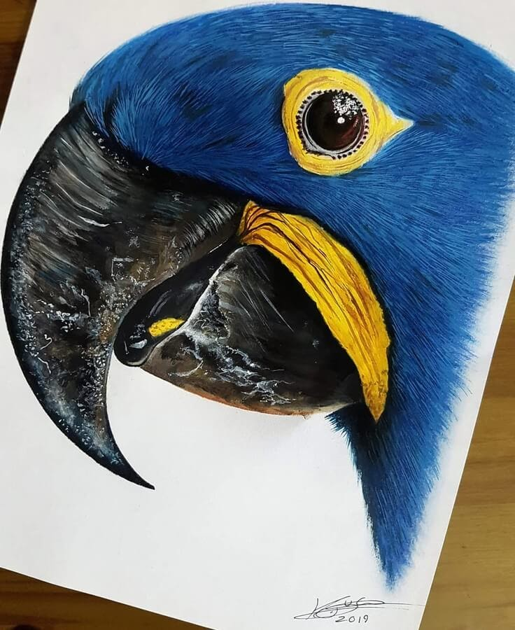 08-Hyacinth-Macaw-Kyle-Duca-Animal-Paintings-www-designstack-co