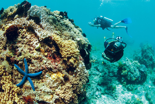 Lặn biển ngắm san hô tại Phú Quốc