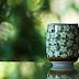 Adelgazar con el té Verde