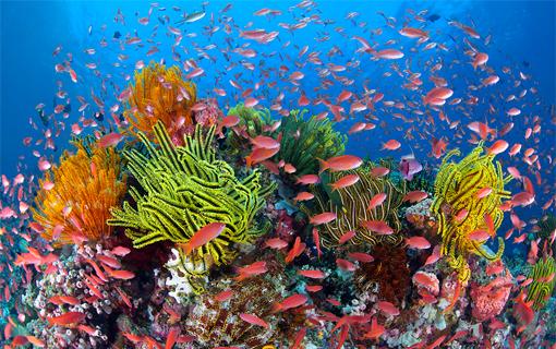 barrier-reef-snorkeling